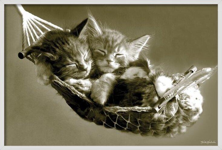 Keith Kimberlin - kittens in a hammock Poster